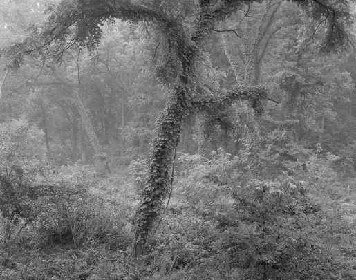 riparian woodland doug.jpg